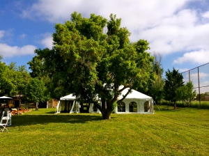 Wedding tent with tree